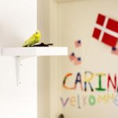 Gode råd til værtsfamilier, besøgsfamilier og Danish Roommastes i DIS